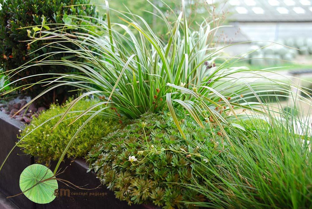 Aménagement d'une terrasse avec poteries en fibre de verre imitation béton. Visualisation de l'évolution de la végétation au fil des saisons.